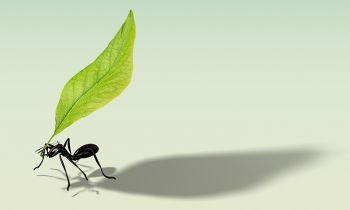 Maratona da vida X Persistência da formiga